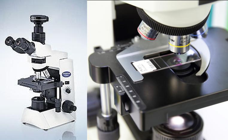 顕微鏡(組織診断)